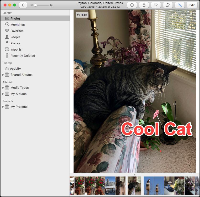 Photos Cat